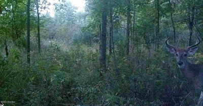 Parma MI Residential Lots & Land For Sale: $50,000