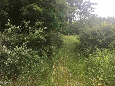 Parma MI Residential Lots & Land For Sale: $275,000