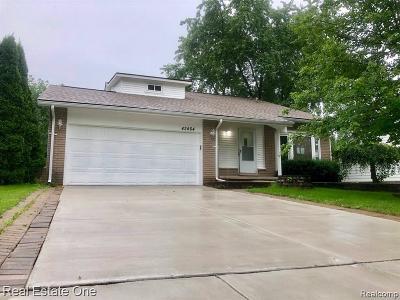 Novi Single Family Home For Sale: 42464 Park Ridge Rd