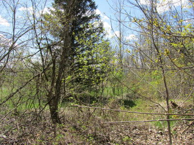 Mulliken Residential Lots & Land For Sale: 4 Green Acres Drive