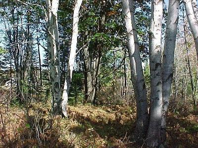 Menominee County, Marinette County Residential Lots & Land For Sale: Love Lane