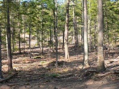 Residential Lots & Land Active-Extended: Unit 4 Vistas Of Walloon #4