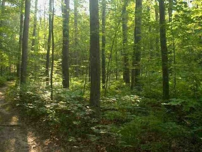 Residential Lots & Land For Sale: Woodland Drive