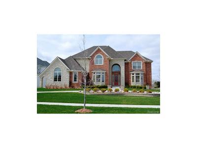 Novi Single Family Home For Sale: 23261 Argyle Street
