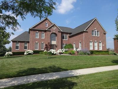 Novi Single Family Home For Sale: 24936 Hadlock Drive