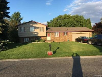 Novi Single Family Home For Sale: 24770 Joseph