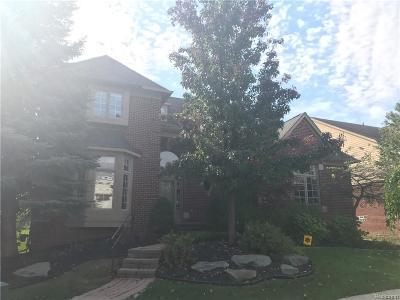 NOVI Single Family Home For Sale: 41457 Twain Place