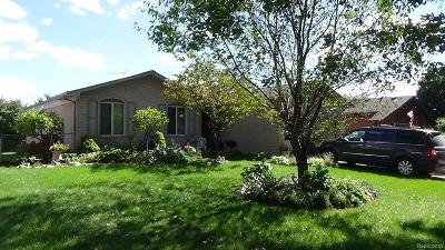STERLING HEIGHTS Single Family Home For Sale: 35622 Maureen Drive