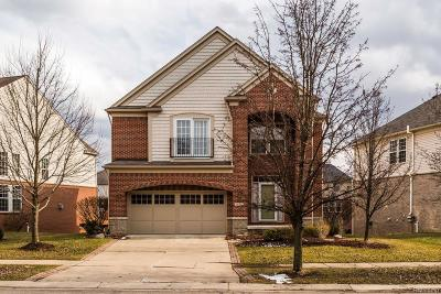Novi Single Family Home For Sale: 44919 Paine Drive