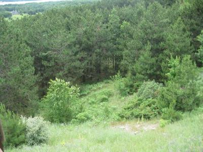 Benzie County, Charlevoix County, Clare County, Emmet County, Grand Traverse County, Kalkaska County, Lake County, Leelanau County, Manistee County, Mason County, Missaukee County, Osceola County, Roscommon County, Wexford County Residential Lots & Land For Sale: 13 Windy Ridge Road