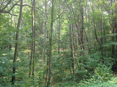 Holland, West Olive Residential Lots & Land For Sale: 6622 142nd Avenue