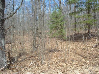 Residential Lots & Land For Sale: 10106 Maple Lane