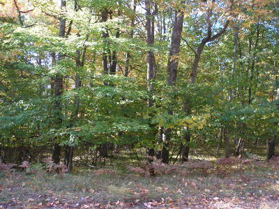 Mecosta County Residential Lots & Land For Sale: 12384 Sundance Drive #147