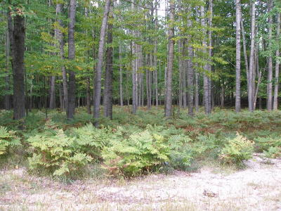 Mecosta County Residential Lots & Land For Sale: 122360 Sundance Drive #148