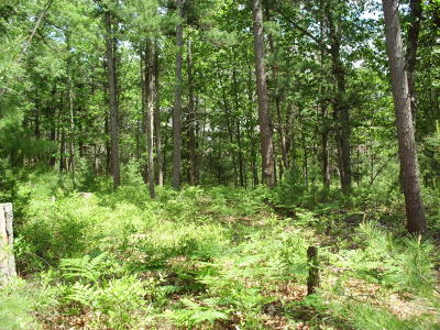Pentwater MI Residential Lots & Land For Sale: $24,900