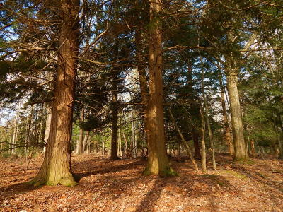 Ludington Residential Lots & Land For Sale: 00 N Jebavy Drive