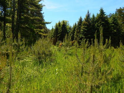 Leelanau County Residential Lots & Land For Sale: 24 Acres W Empire Highway