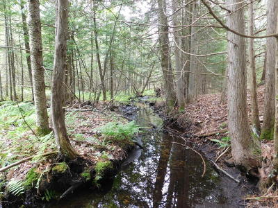 Kalkaska County Residential Lots & Land For Sale: 102 Acres M-66