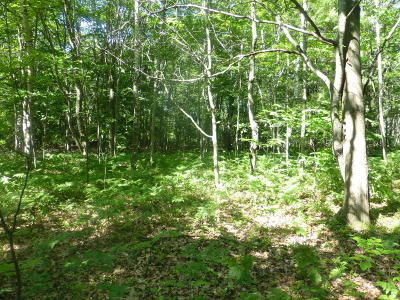 Residential Lots & Land For Sale: Mears