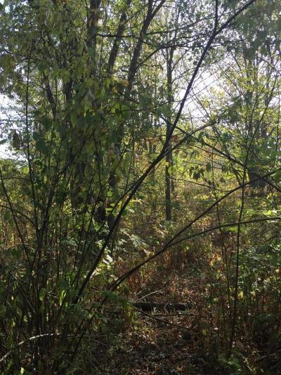 Caledonia Residential Lots & Land For Sale: 8014 Patterson Avenue SE