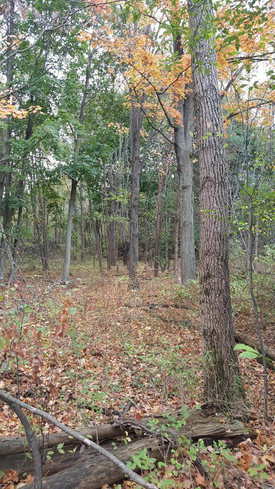 Holland, West Olive Residential Lots & Land For Sale: Quincy Street