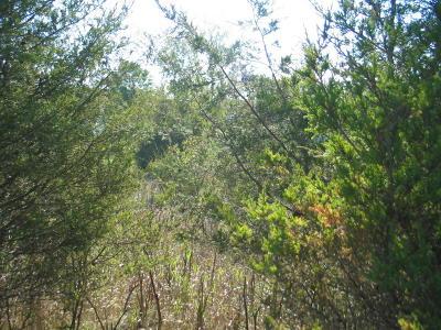 Hillsdale County Residential Lots & Land For Sale: 10661 Glendalough Lane