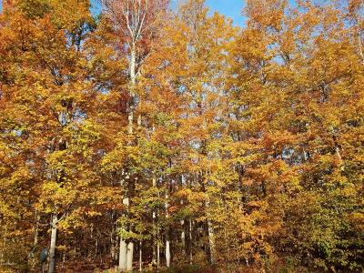 Manistee County Residential Lots & Land For Sale: 133 Acres North Manistee County Line Road