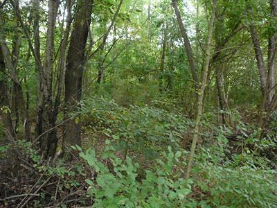 Branch County Residential Lots & Land For Sale: Oliverda Road