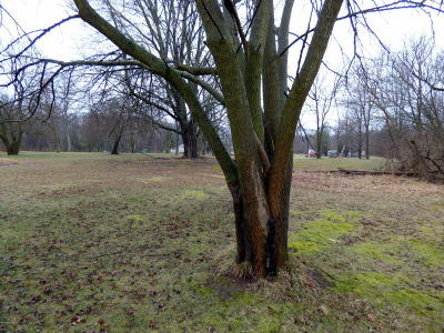Cass County Residential Lots & Land For Sale: 406 Tuthill Street