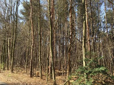 Saugatuck, Douglas Residential Lots & Land For Sale: 134th Avenue