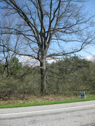Manistee County Residential Lots & Land For Sale: Red Apple Rd. Road