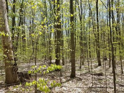 Benzie County Residential Lots & Land For Sale: 80 Acres Stanton Rd