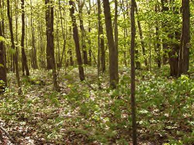 Oceana County Residential Lots & Land For Sale: V/L W Wood Road