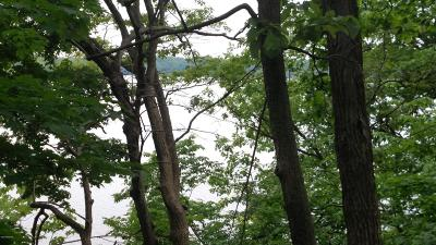 Ionia County Residential Lots & Land For Sale: #24 E Peckins Road