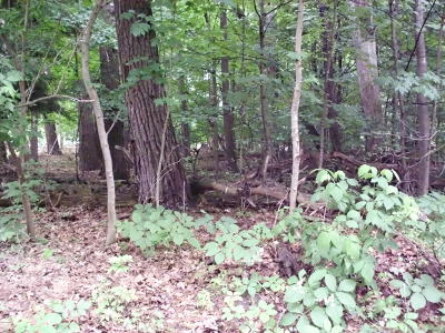 Pentwater MI Residential Lots & Land For Sale: $39,900