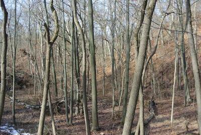 Bridgman Residential Lots & Land For Sale: Wildwood Drive #11