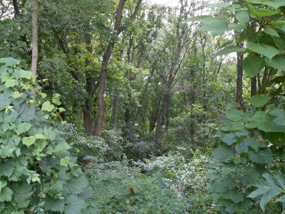 Berrien County, Branch County, Calhoun County, Cass County, Hillsdale County, Jackson County, Kalamazoo County, St. Joseph County, Van Buren County Residential Lots & Land For Sale: Viking Drive Lots