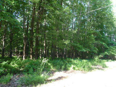 Canadian Lakes Residential Lots & Land For Sale: 11995 Wales