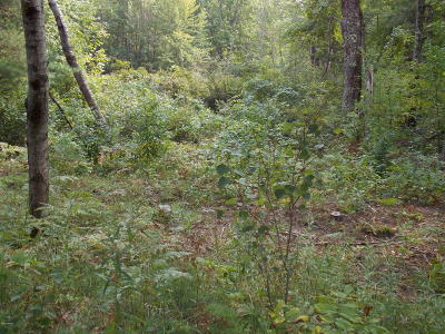Grand Traverse County Residential Lots & Land For Sale: M 137