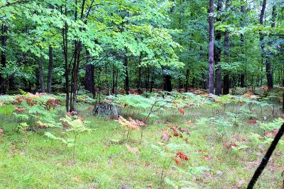 Missaukee County Residential Lots & Land For Sale: V/L W Anderson Trail