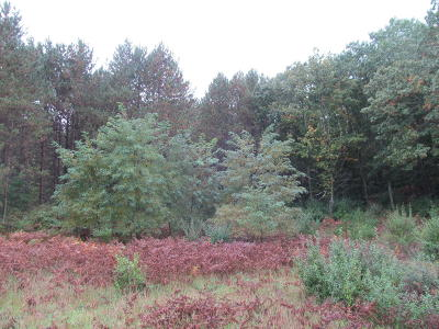Benzie County, Charlevoix County, Clare County, Emmet County, Grand Traverse County, Kalkaska County, Lake County, Leelanau County, Manistee County, Mason County, Missaukee County, Osceola County, Roscommon County, Wexford County Residential Lots & Land For Sale: Skookum Road