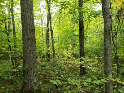 Newaygo County Residential Lots & Land For Sale: 1220 E 16 Mile Road
