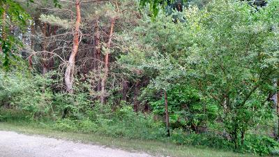 Mason County Residential Lots & Land For Sale: Norway Ct. #12&13