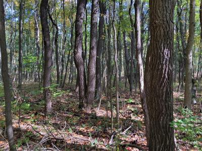 Berrien County Residential Lots & Land Active Backup: 2 Huntington