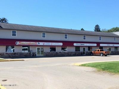 Berrien County Commercial For Sale: 154 Badt Drive