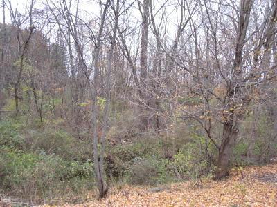 Berrien County Residential Lots & Land For Sale: 2050 E Britain Avenue