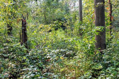 Berrien County, Cass County, Van Buren County Residential Lots & Land For Sale: M-51