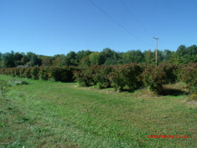Clinton County, Gratiot County, Isabella County, Kent County, Mecosta County, Montcalm County, Muskegon County, Newaygo County, Oceana County, Ottawa County, Ionia County, Ingham County, Eaton County, Barry County, Allegan County Residential Lots & Land For Sale: 480 62nd Street