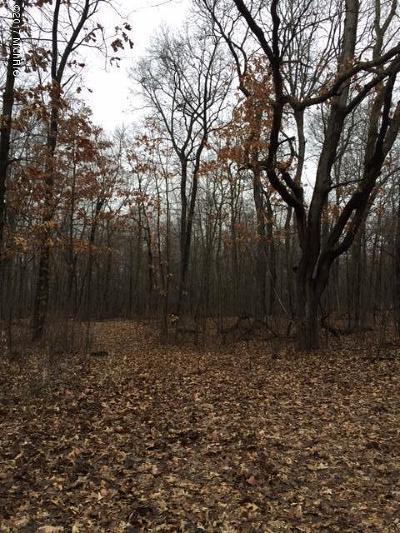 Berrien County, Branch County, Cass County, Calhoun County, Hillsdale County, Jackson County, Kalamazoo County, Van Buren County, St. Joseph County Residential Lots & Land For Sale: Morgan Road N