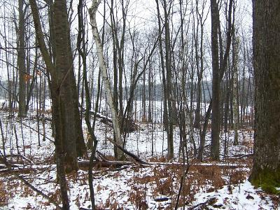 Reed City Residential Lots & Land For Sale: 10137 Alpine Drive